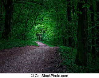 misztikus, sötét, erdő, út
