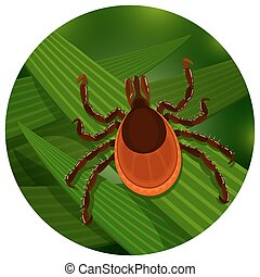Mite in the tall green grass