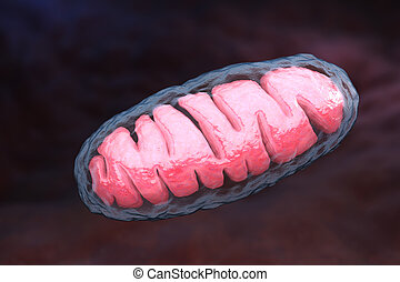 Mitochondrion is a double membrane-bound organelle found in...