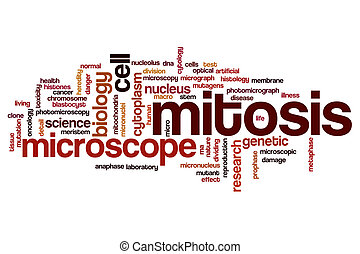 Mitosis word cloud concept