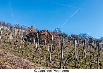 mitte, wenig, hütte, wineyard