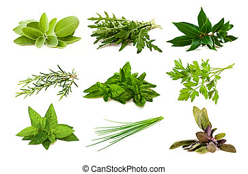 Mix aromatic herbs isolated on white
