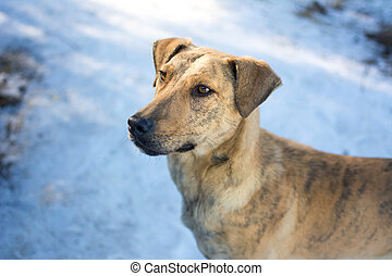Mix breed dog standing on snow - Mix breed dog standing on...