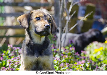 Mix breed puppy among the field flowers - Mix breed puppy...