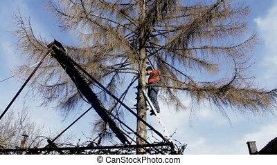 mix of 2 shots lumberjack on the tree