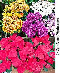 Mix of flower in the garden closeup