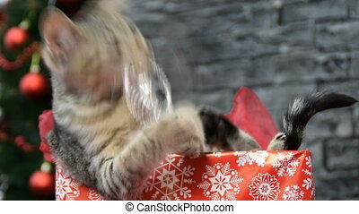 mix of four scenes, beautiful cat  in holiday spirit surrounded by New Year's decoration