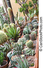 mix of many succulents and cactus with very sharp prickles and thorns of the cactus desert plants