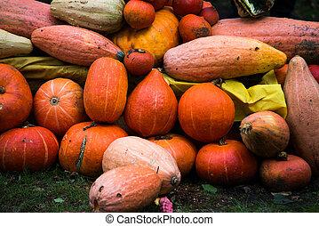 Mix of pumpkins on the grass