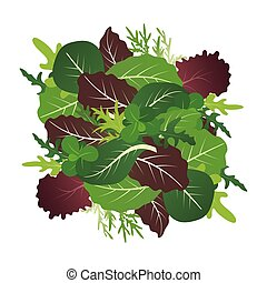 Mix of salad leaves. Arugula, spinach and lettuce leaf....