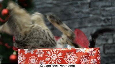 mix of six scenes, beautiful cat and puppy  in holiday spirit surrounded by New Year's decoration
