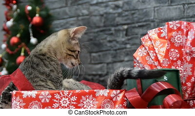 mix of six scenes, beautiful cat and white puppy in holiday spirit surrounded by New Year's decoration