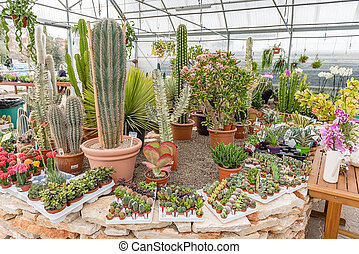 Mix of succulent plants inside a greenhouse