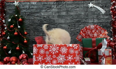 mix of tree scenes,  white puppy in holiday spirit surrounded by New Year's decoration