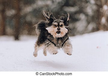 Mixbreed little dog in the winter forest