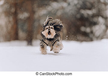 Mixbreed little dog running in winter forest