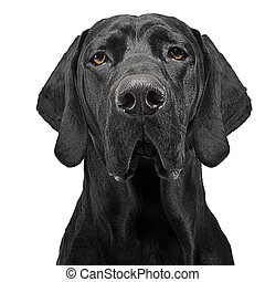 Mixed breed black dog portrait in white studio