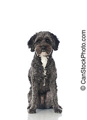 Mixed breed dog - Dog isolated on white