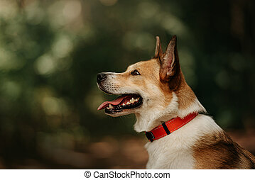 mixed breed dog in a collar posing outdoors