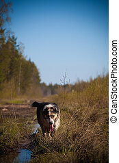 Mixed breed dog in the autumn field