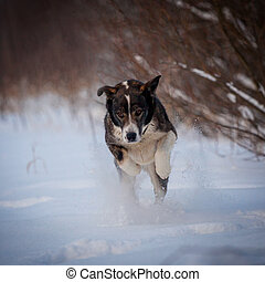 Mixed breed dog in the winter field