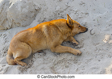 Mixed breed dog lying in the heap of sand