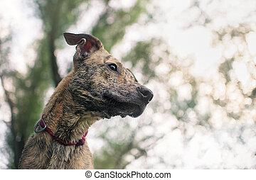 mixed breed dog, portrait close