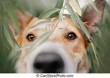 mixed breed dog portrait outdoors in summer, close up on the eyes