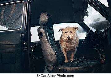mixed breed dog posing in the car