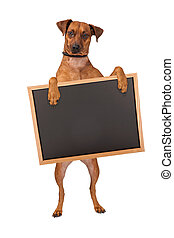 Mixed Breed Dog Standing With Chalk Board