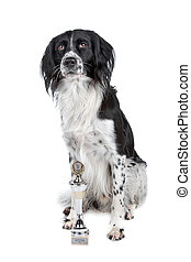 Mixed breed dog and his prize sitting, isolated on a white...