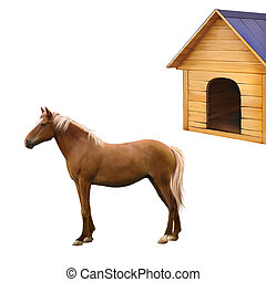 Mixed breed horse standing, old wooden dog house,...