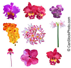 mixed collection of close up beautiful flowers petal isolated on white background use for decoration and multipurpose