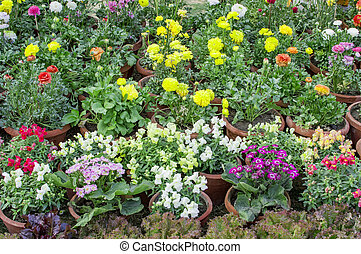 Mixed flower plants