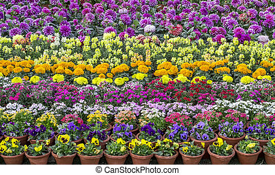 Mixed flowerbed