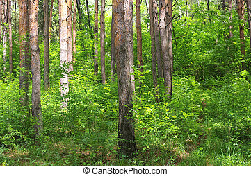 Mixed forest with deciduous and coniferous trees