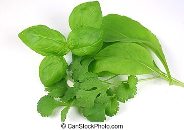 Mixed Fresh Herbs - coriander leaves against white...