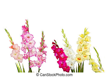 Mixed gladiolus flowers