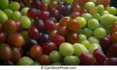 Mixed Grapes In Fine Water Mist - Delicious grapes in fine...