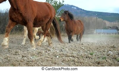 Mixed horses herd is following dark brown horse with black mane by dusty road between meadows. Brown cold-blood horse, white hucul, dark brown hucul and dotted pony. Slow motion.