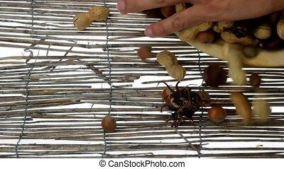 mixed nuts - sprinkle of various nuts