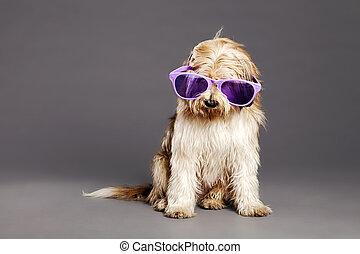 Mixed-Race Dog with Purple Glasses in Studio - Studio...
