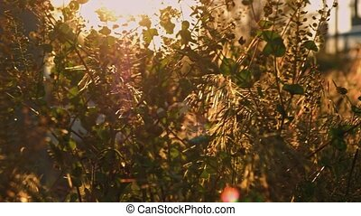 Mixed species wild grass view in sunset light real-time...