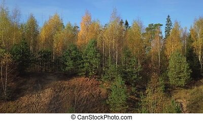 Mixed tree forest in autumn