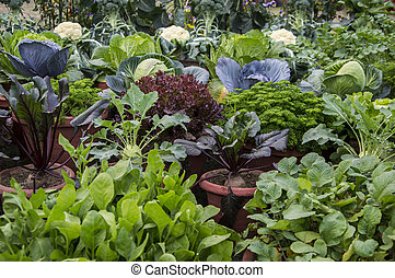 Mixed vegetable plants