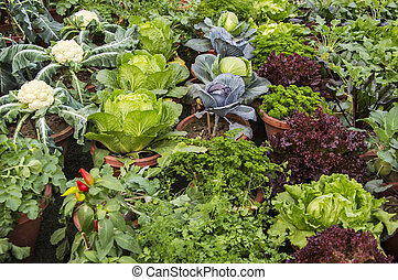Mixed vegetables and other plants