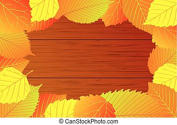 Mixture of autumn leaves - Autumn - mixture (elm, hornbeam,...