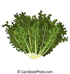 mizuna, サラダ, 健康, 菜食の食物, イラスト, 葉, ベクトル, 背景, 新たに, 有機体である, 白