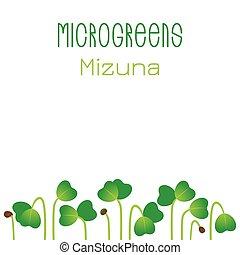 mizuna., empaquetado, design., semillas, brotar, siembre semillas, microgreens