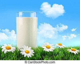 mjölk glas, in, den, gräs, med, tusenskönor